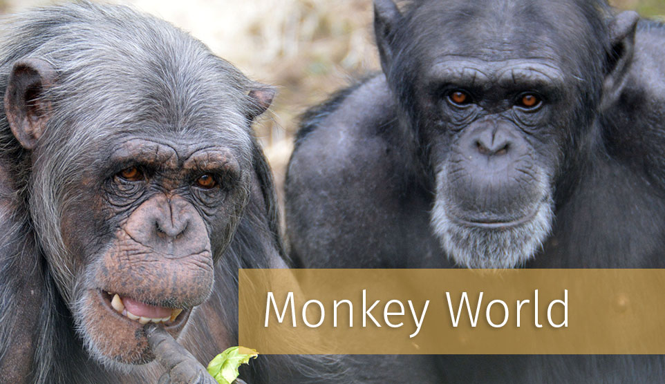 Things to do in Dorset - Monkey World