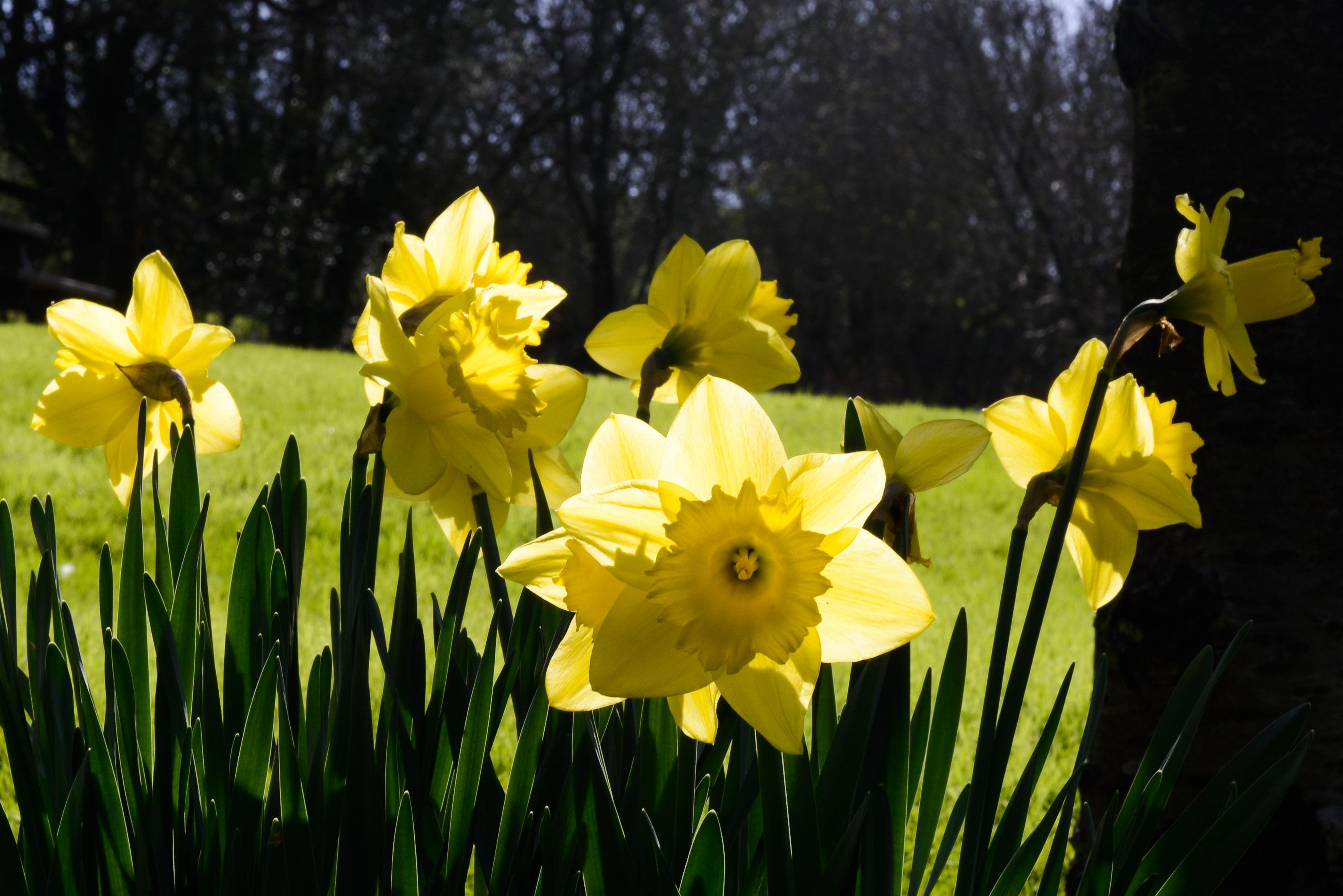 Spring in Dorset at Upton Grange